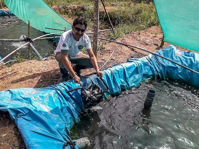 La increíble producción de truchas en la ceja de selva echaratina