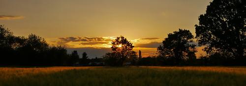 sunset hampshire crookham trees barley shadow