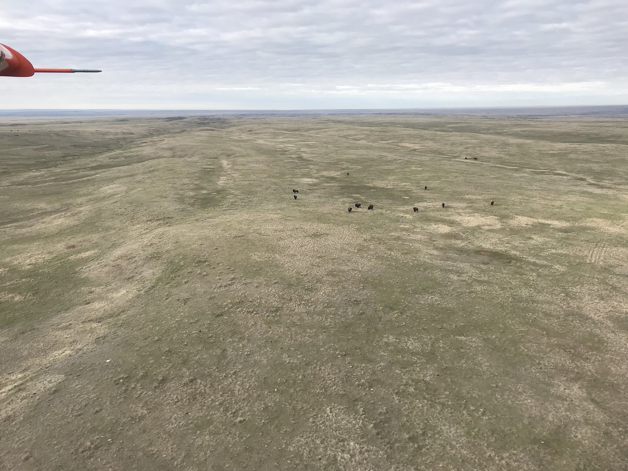Where the bison roam, USFWS
