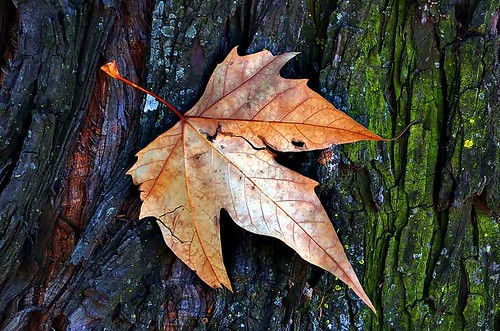 Textures with leaf and bark | by noelcmn