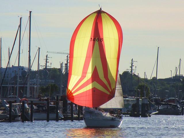 ein Segelschiff mit Spinnacker fährt in die Schwentine ein- zum Delfingucken