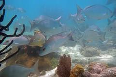 Underwater scene, Dry Tortugas, Florida Keys