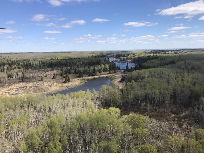 May 2019. Parkland wetland habitat