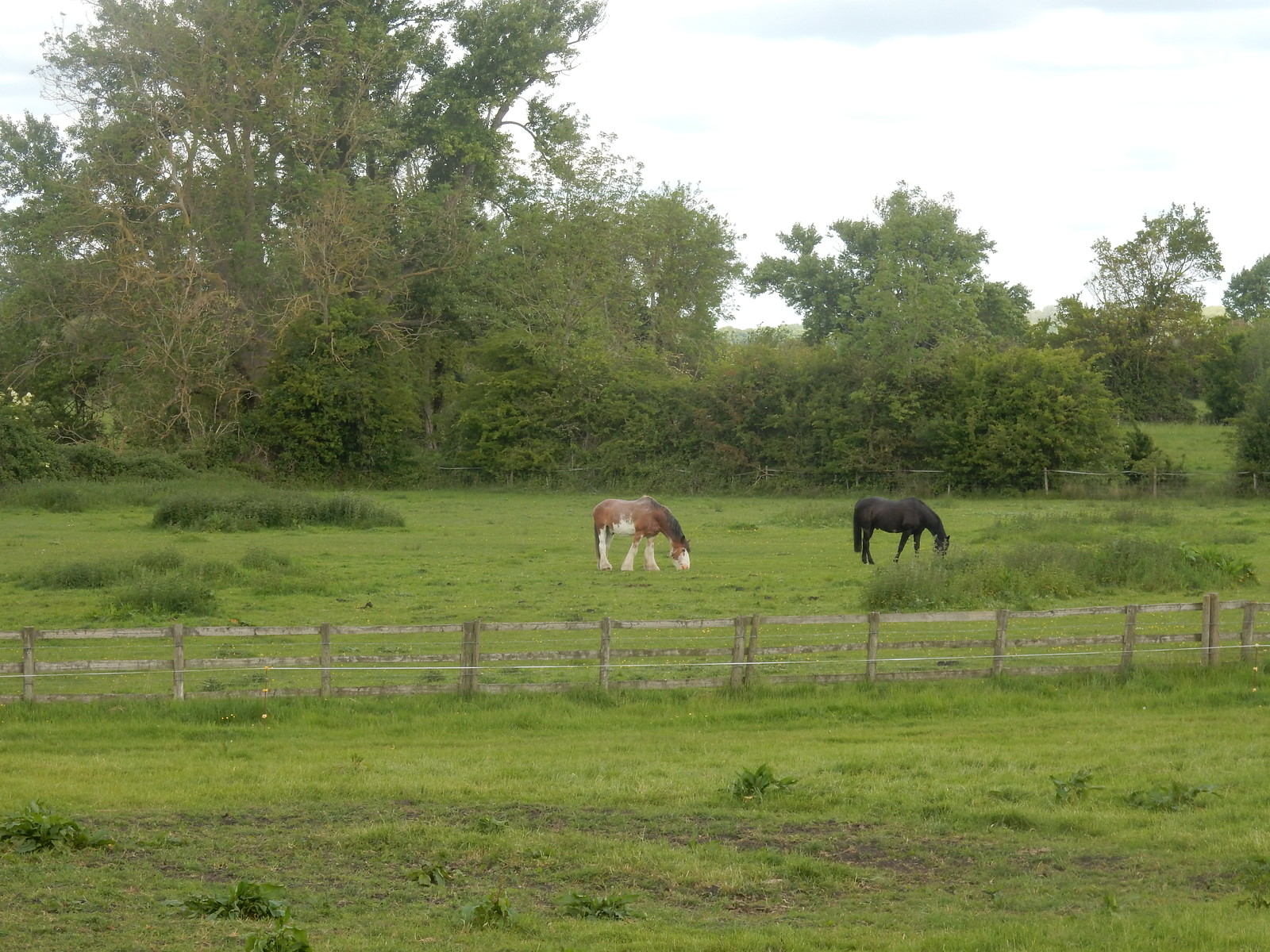 Horses in a field Cholsey to Goring
