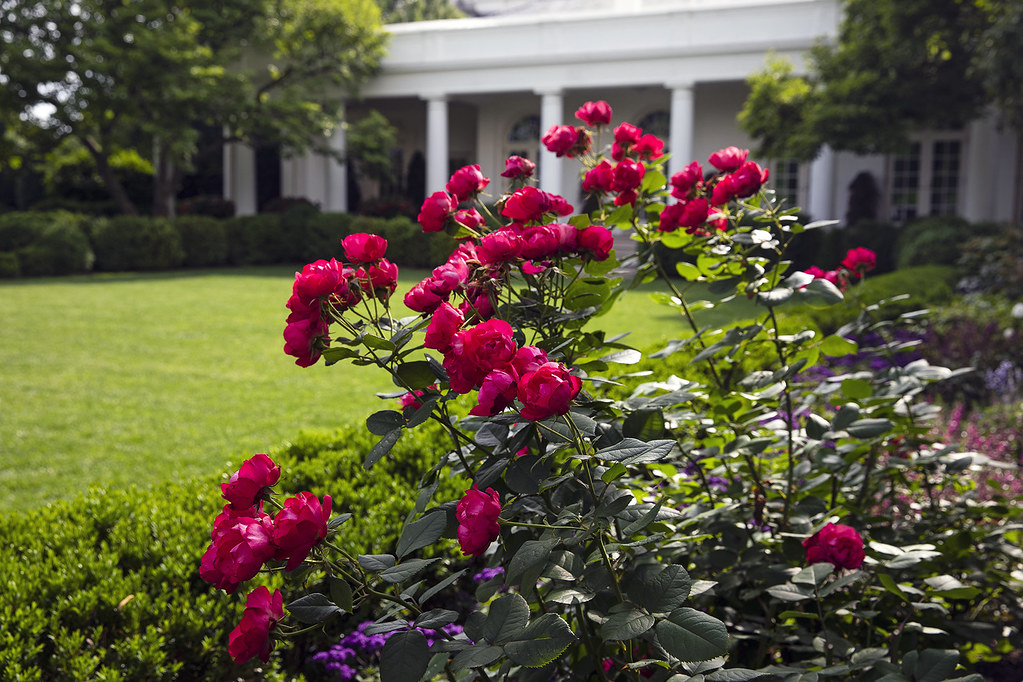 The Rose Garden of the White House