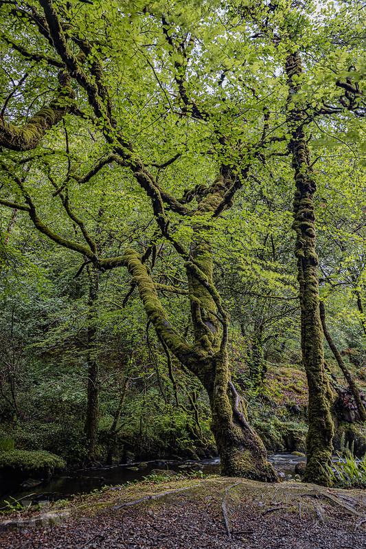 20190529-2019, Irland, Langzeitbelichtung, Wald, Wasserfall-019.jpg