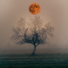 Fog and moon