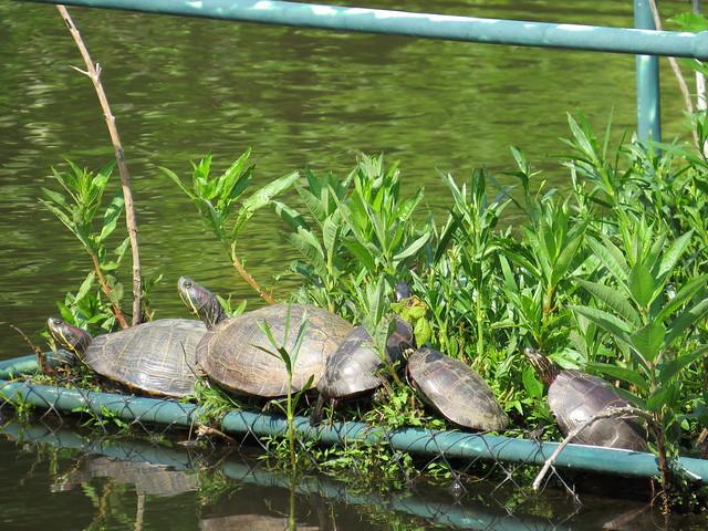 Turtle Line-up