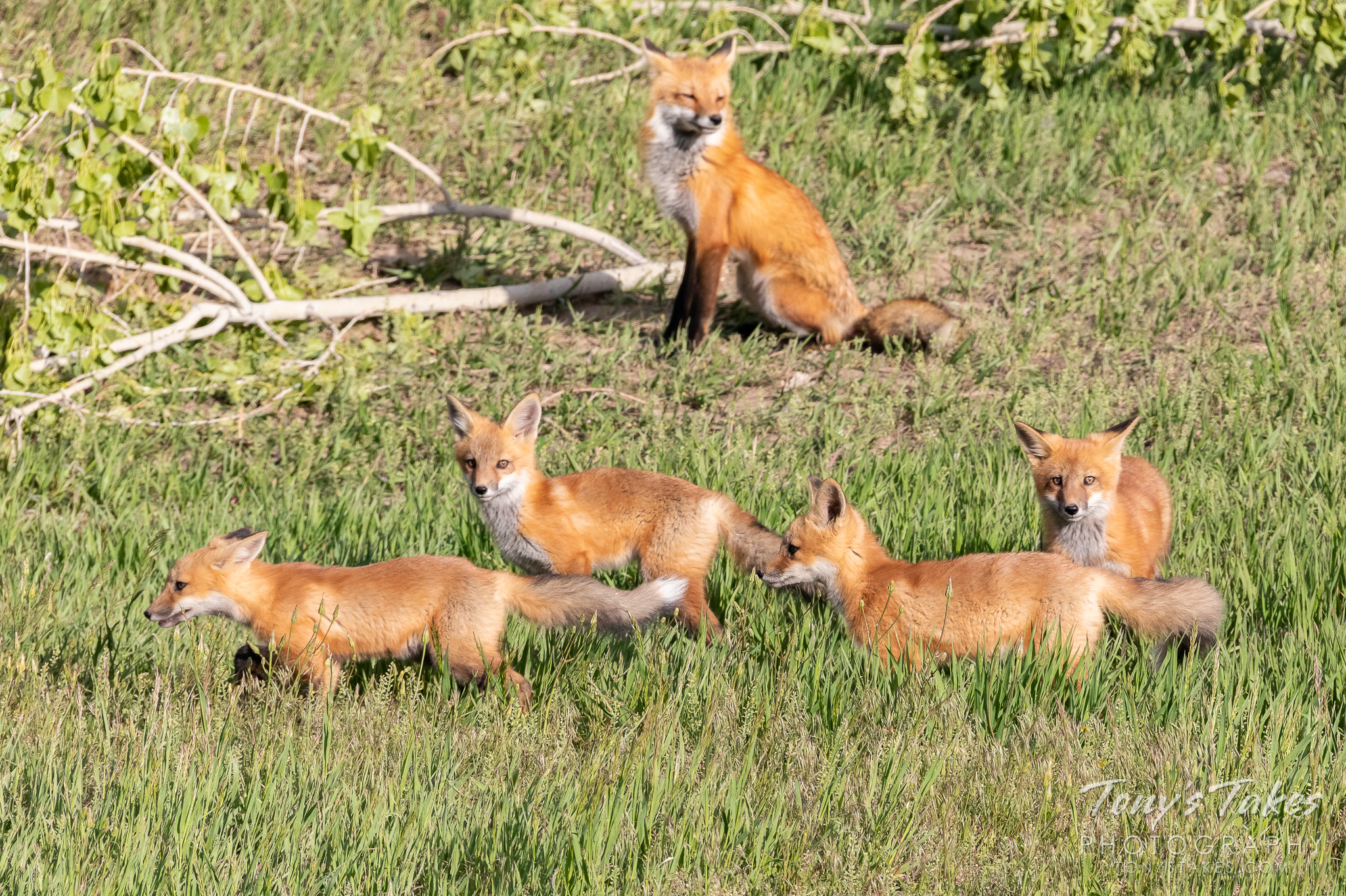 All in the family for Fox Friday