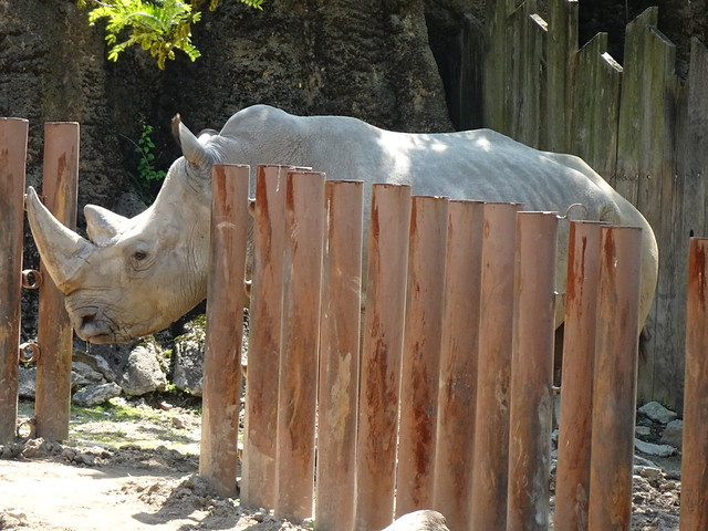 Philadelphia Zoo - Philadelphia, PA (4)