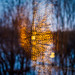 Blue hour forest abstract, reflected light on window