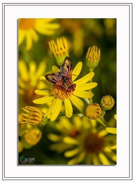"""Chaque fleur attire sa mouche.""   De Jules Renard"