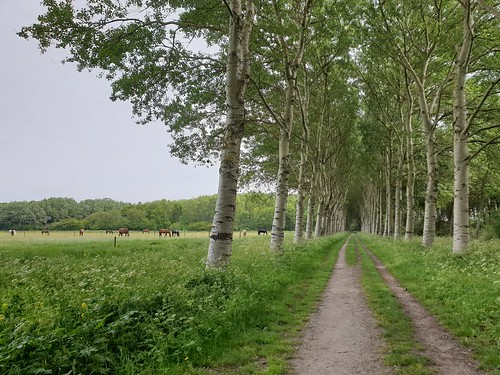 groot20190526_113833 | by Danyell Onbehauen-Frigge