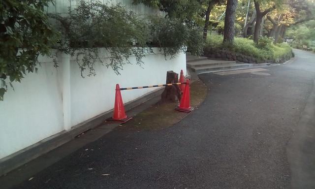 Protect the tree, Senzoku-ike Park, Ota, Tokyo