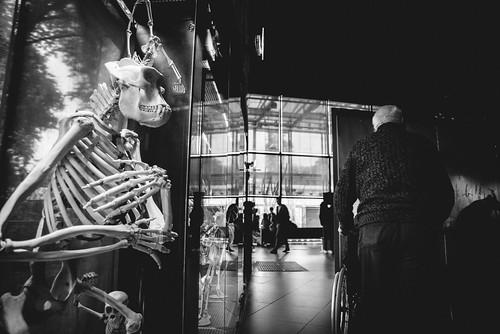 museum 184-1