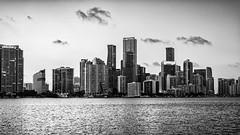 Miami Skyline Black & White