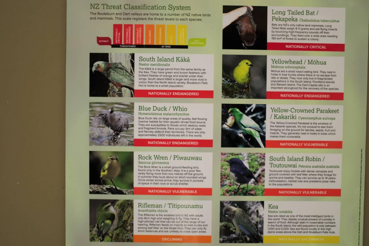 ニュージーランド ルートバーントラックの鳥