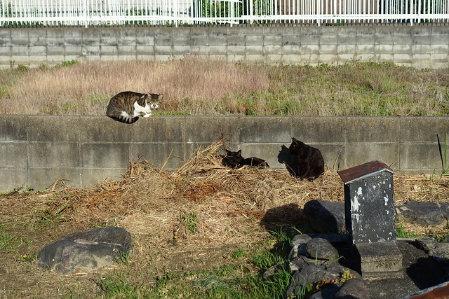 Today's Cat@2019-05-30
