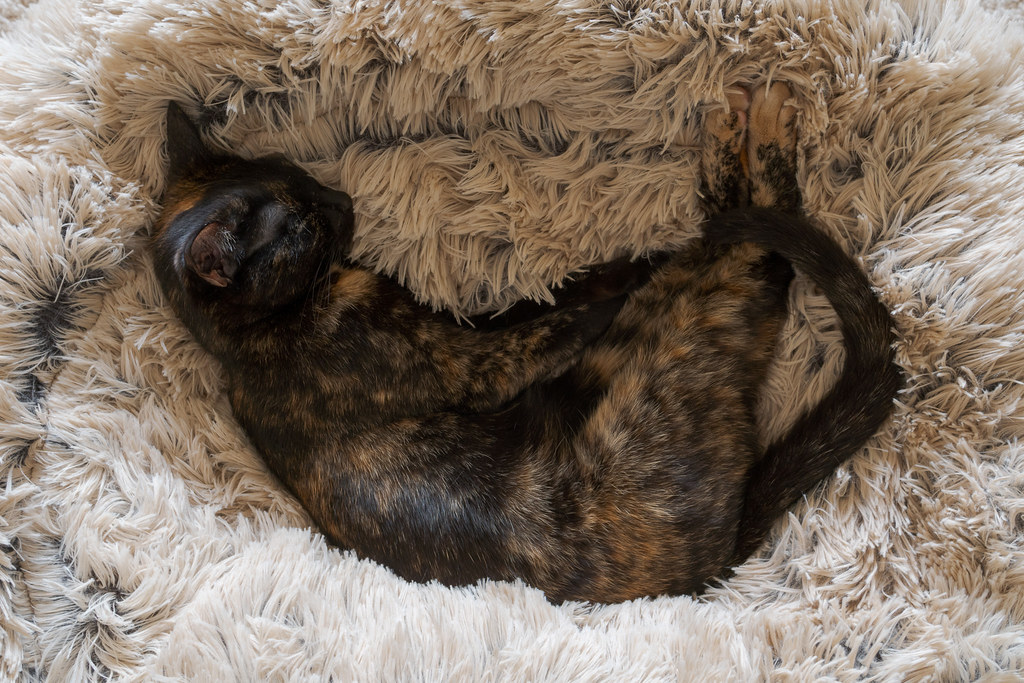 Our cat Trixie sleeps in the plush new cat bed in May 2019
