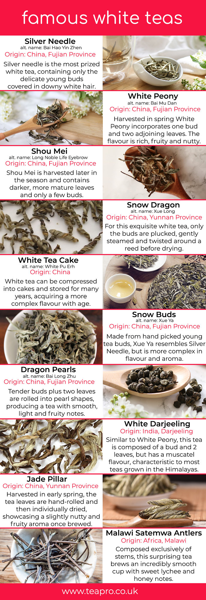 Famous White Tea varieties Teapro