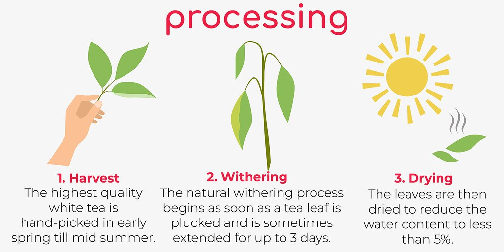 White Tea Processing Teapro