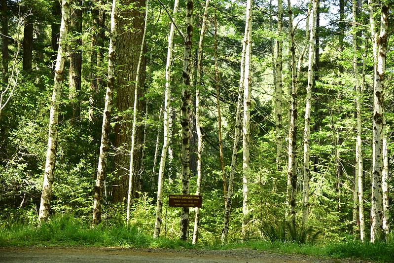 Frances Shrader Old Growth Trail