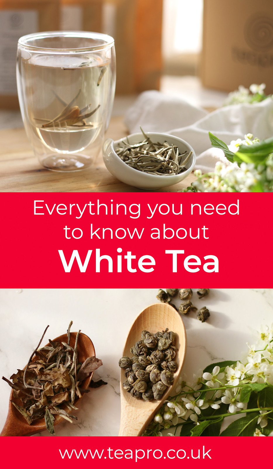 Everything You Need to Know about White Tea by Teapro
