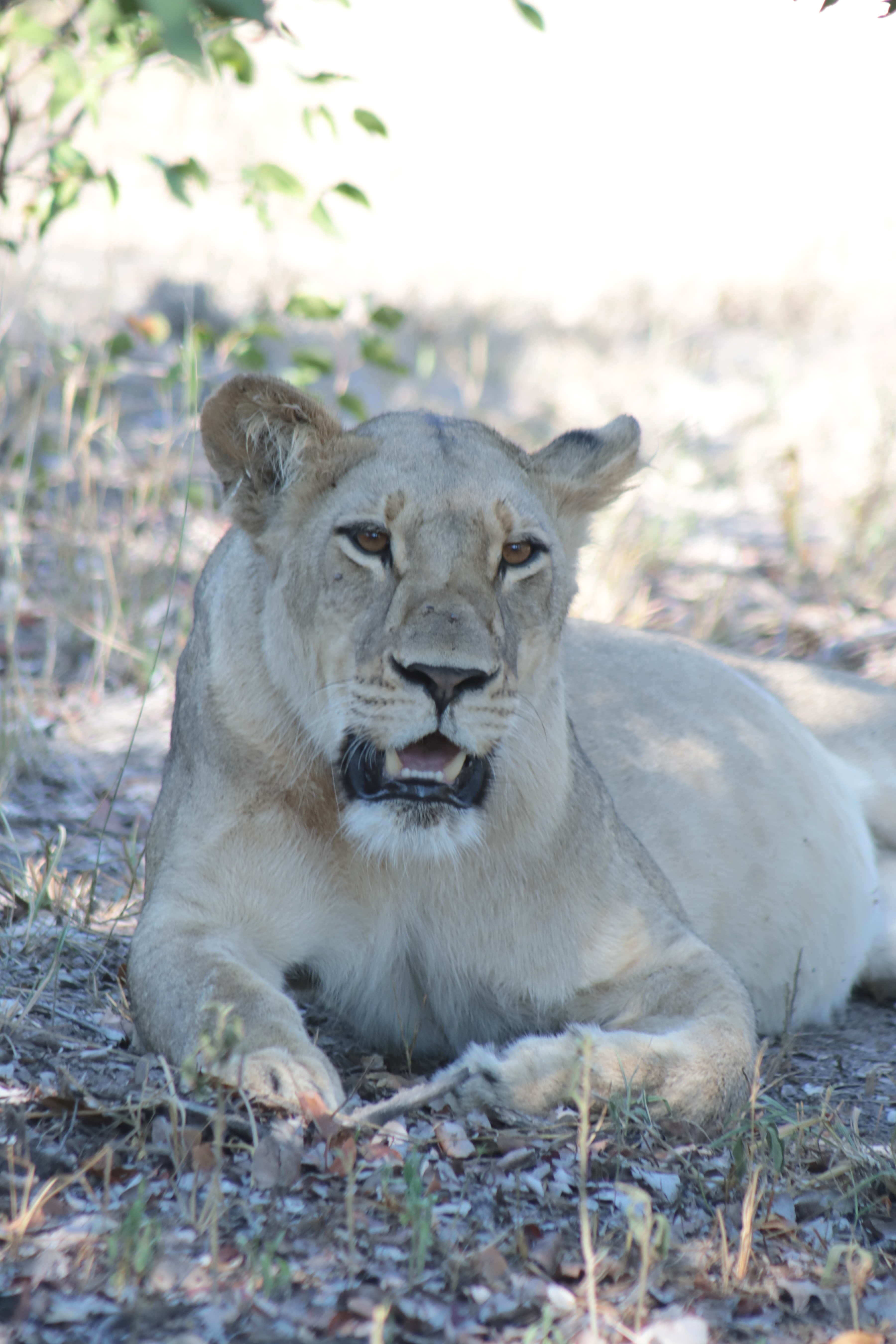 Moremi Game Reserve