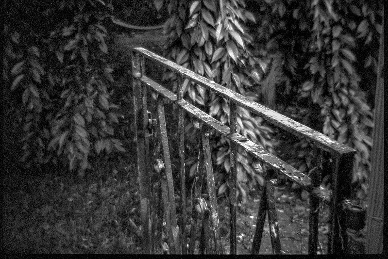cast iron gate, rusted, front yard, neighborhood, Asheville, NC, Bencini 24S, Bergger Pancro 400, HC-110 developer, 5.28.19