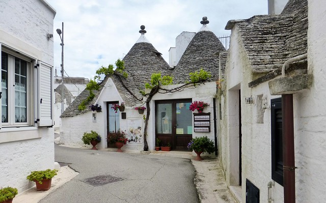 the vine among the trulli