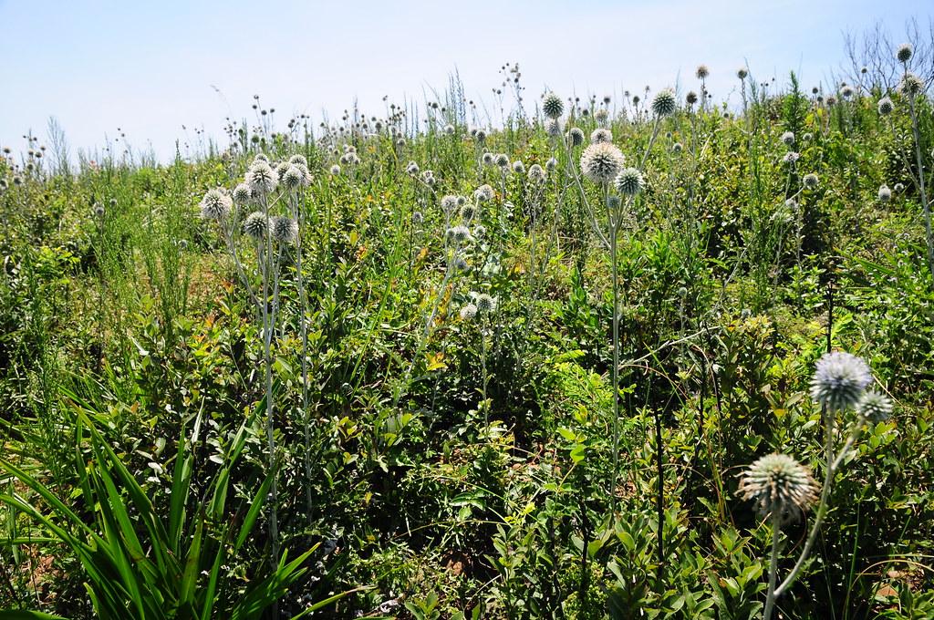 西部平原與丘陵面臨大規模人為開發與活動,也使得原生植物遭受極大的壓迫。
