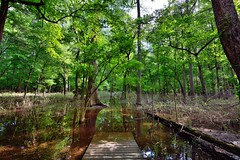 As I Walked, I Pondered a Path to Take (Congaree National Park)