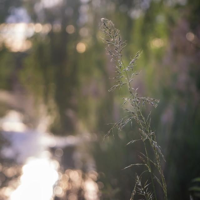 Sunset mood | SONY ⍺6000 & vintage manual Canon nFD 50mm ƒ/3.5 Macro