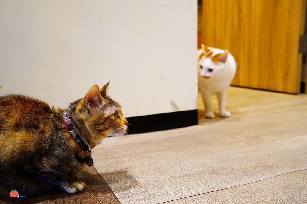 桃園寵物友善餐廳推薦 DEMO HOUSE 有貓咪店長