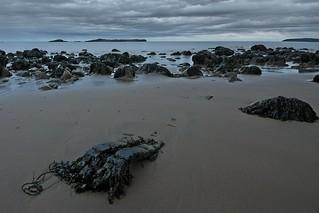 Low tide - Irving NAture Park