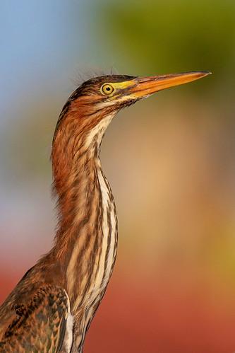 outdoor seaside shore sea sky water nature wildlife 7dm2 7d ii ef100400mm ocean canon florida bird