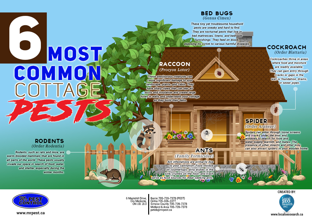 Mr. Pest Control: Top 6 Cottage Pests