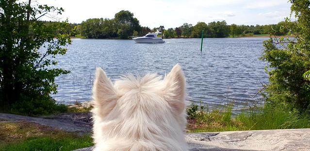 Boatspotting.