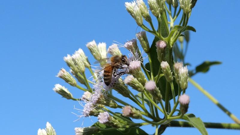 蜂類並非全是毒蜂,也有較溫馴的授粉蜜蜂