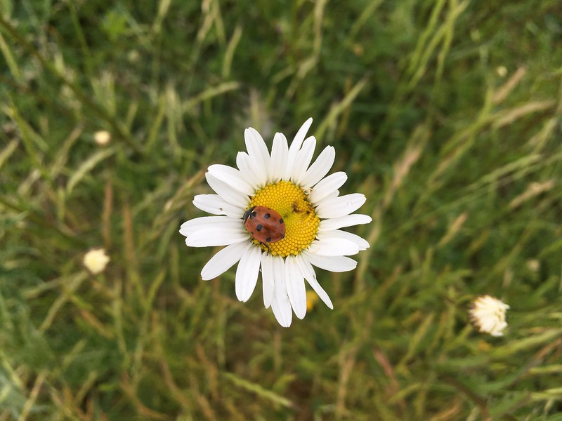 Daisy with ladybird friend