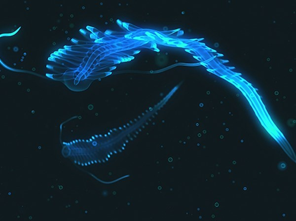 bioluminescent-deep-sea-creature