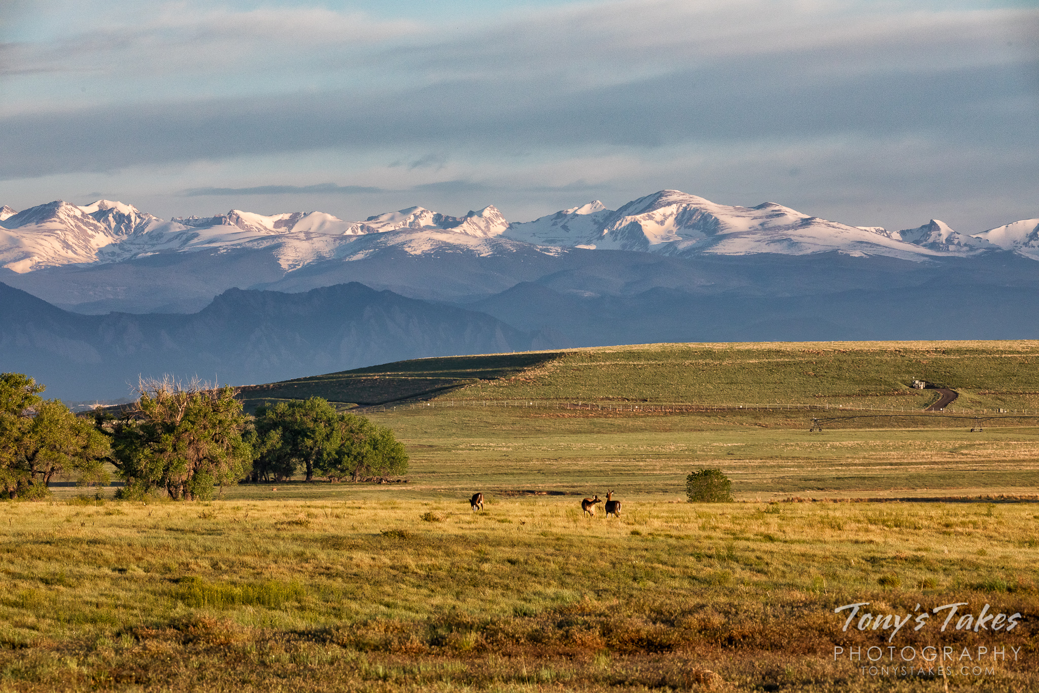 The golden Great Plains with snow-covered Rocky Mountains behind them. (© Tony's Takes)