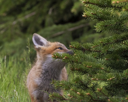 Take time to smell the Evergreens