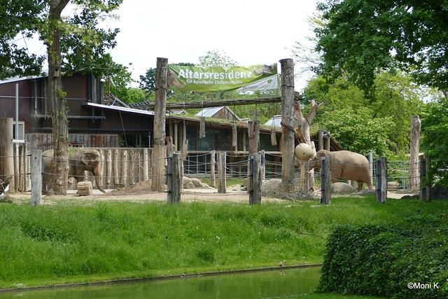 72-asiat.Elefanten Nanda und Jenny