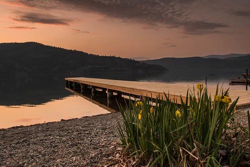 sunrise lake okanagan iris invasive