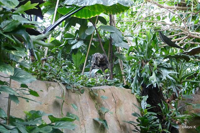 16-Sakis im Dschungel