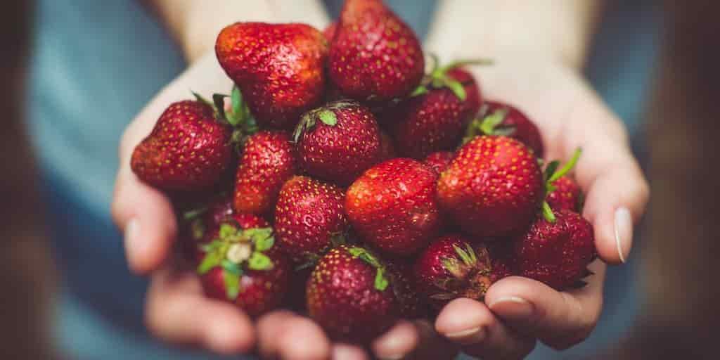 robot-ramasseur-de-fraises-tests