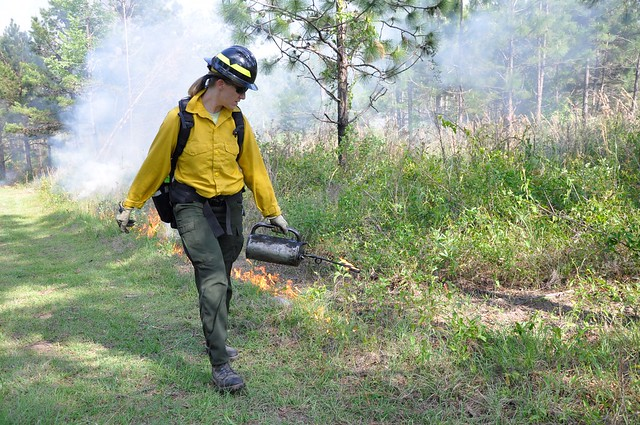Louise Loudermilk conducting controlled burning with a drip torch