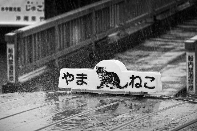 Rainy day - Iriomote Island, Okinawa, Japan