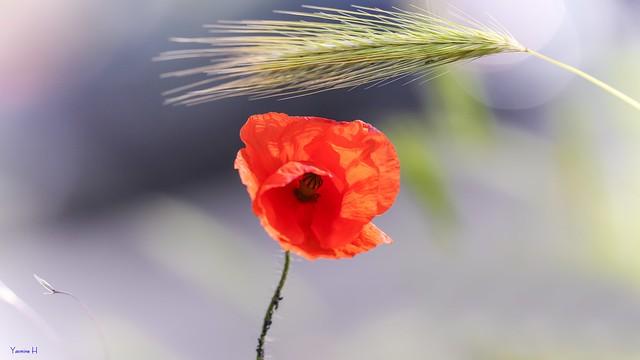 #Remembrance - 6859